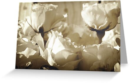 Roses galore by Michelle Ricketts