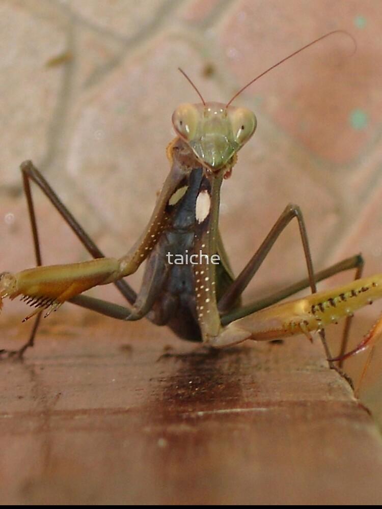 Praying Mantis Making Eye Contact Kids T Shirt By Taiche Redbubble
