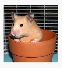 Potted Hamster Photographic Print