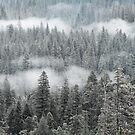 Mist among the trees by luther102