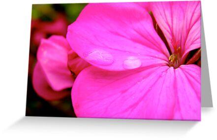 Pink Geranium by Michelle Ricketts