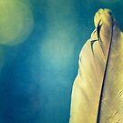 Feather bokeh by Jill Ferry