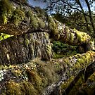 The Old Weathered Fence by Mark Buchanan
