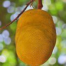Jackfruit by tropicalsamuelv