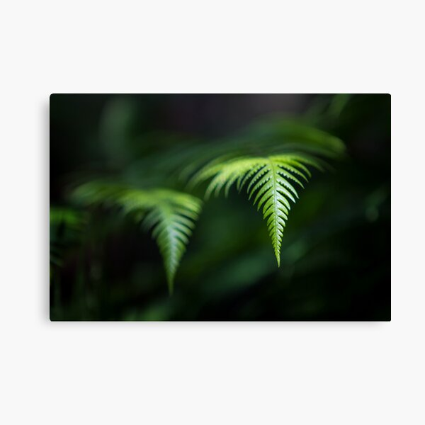 Fern in Dappled Sunlight Canvas Print