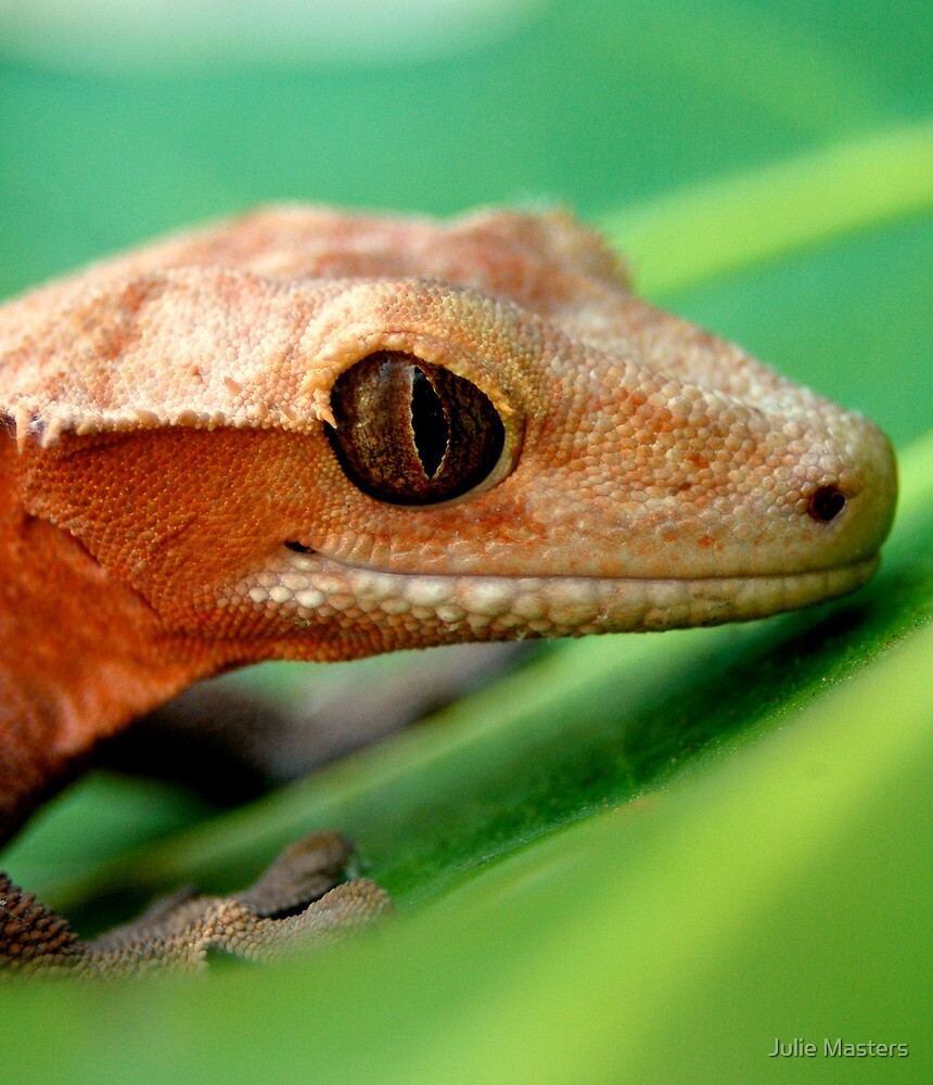Gecko by Julie Masters