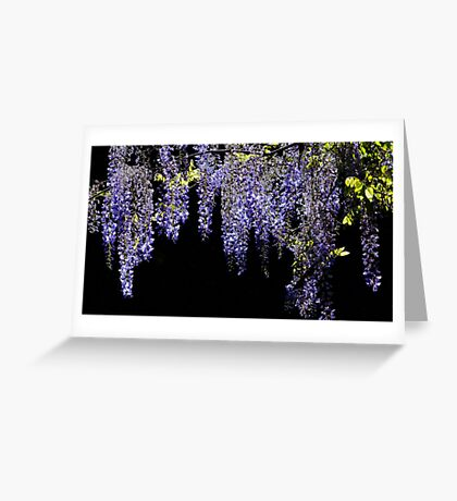 Wisteria Worth Waiting For Greeting Card