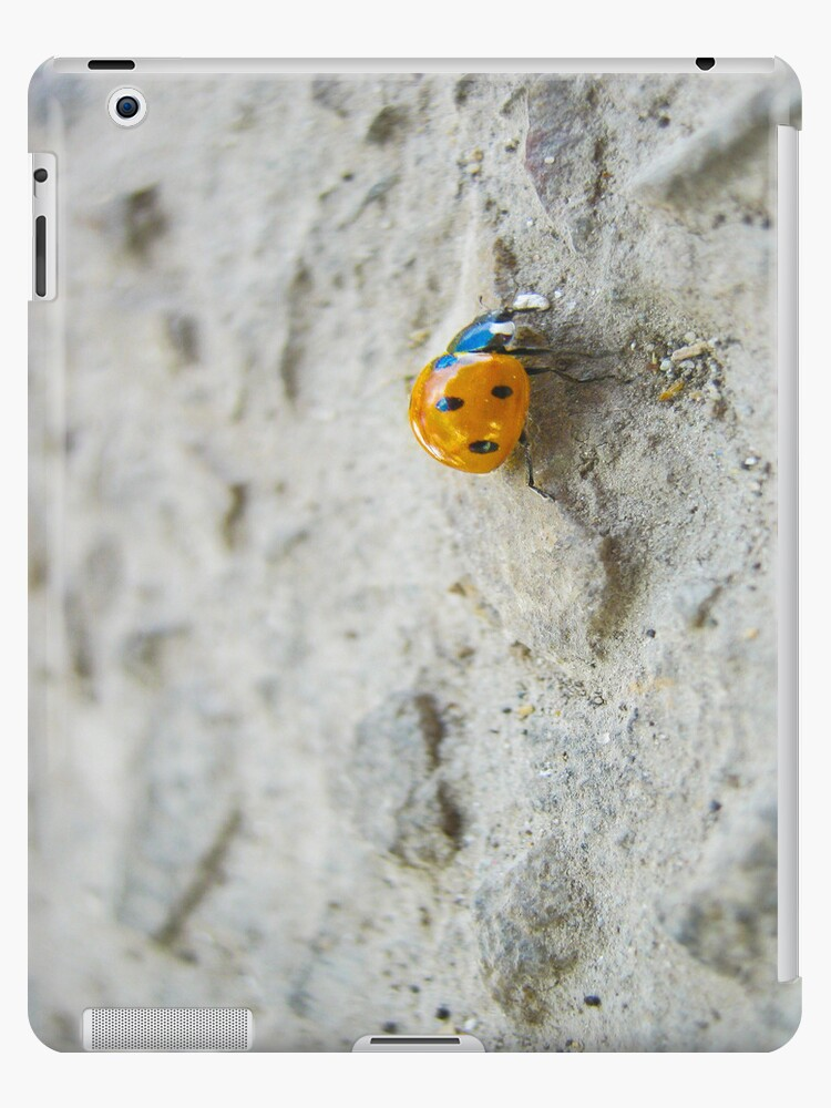 Ladybird by lovetoclick