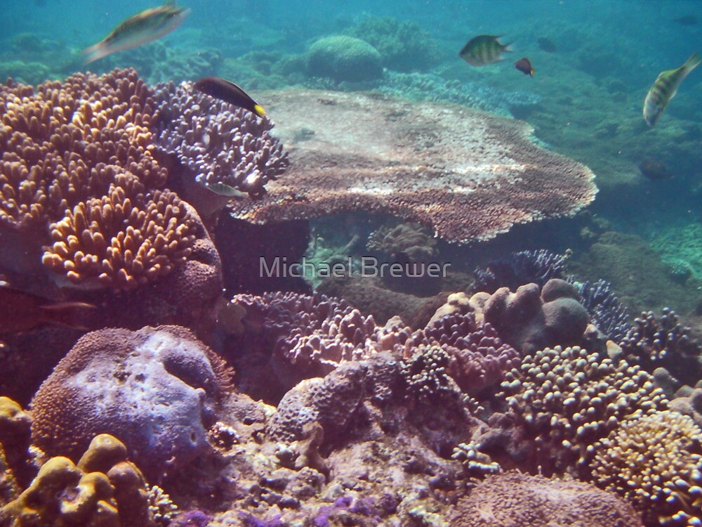 Coral Garden  by Michael Brewer