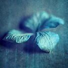 Blue petal by Jill Ferry