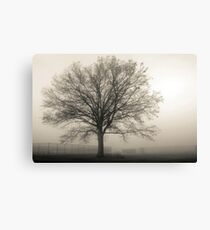 One Tree in Ball Field Canvas Print
