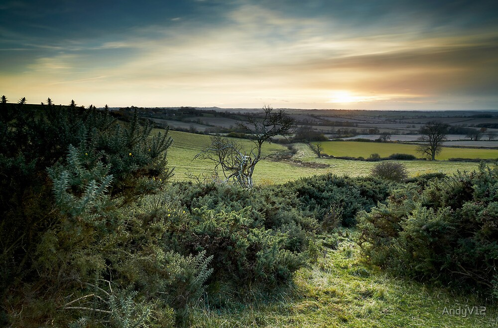 On Gorse by Andy Freer