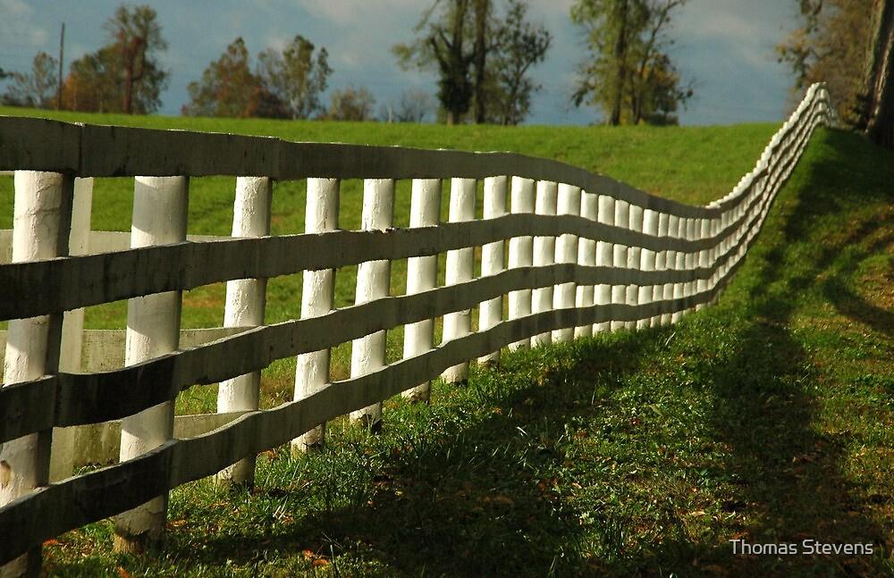 Sun Fence by Thomas Stevens