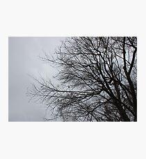 aura Photographic Print