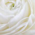 Swirl by Jill Ferry