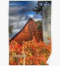 Vineyard and Barn After Rainfall Poster