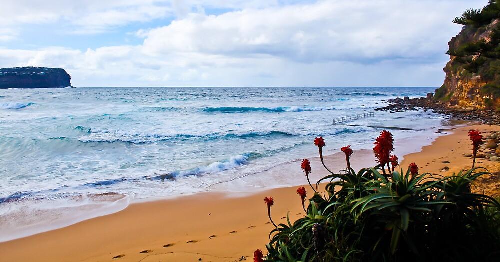 Beach Buds by jennyanneok