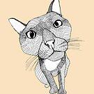 Bigface Cat by caseysplace