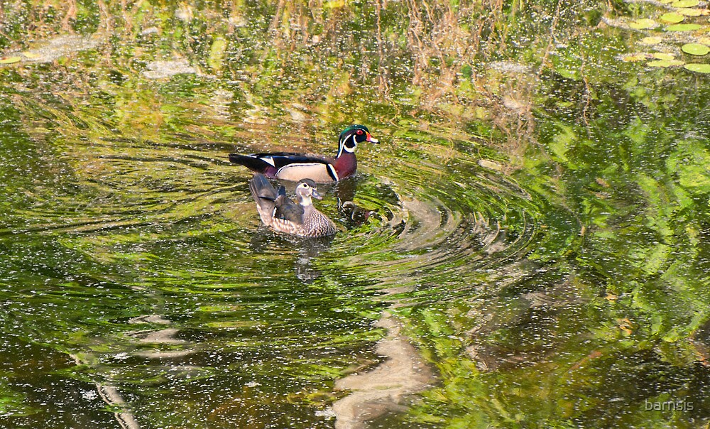 A Mated pair of Wood Ducks by barnsis