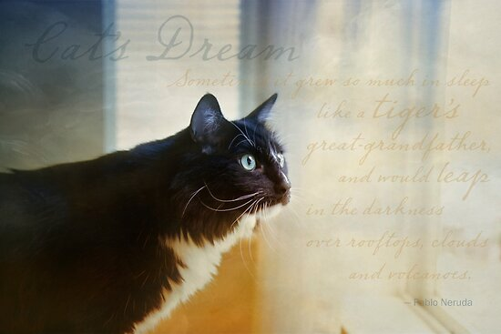 Cat's Dream by Lynn Starner