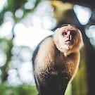 White-Faced Capuchin Monkey by Wanagi Zable-Andrews