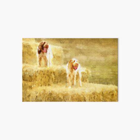 Straw bales Spinoni Art Board Print