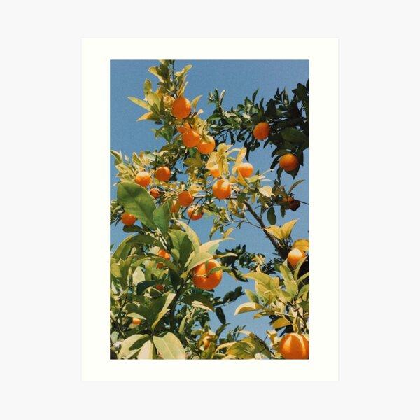 Vintage Oranges Art Print