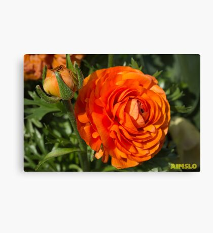 How Many Petals Can You Count? Canvas Print