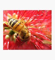 Bee Macro Photographic Print