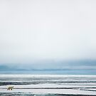 The King of the Arctic - Polar bear in Fram Strait by Algot Kristoffer Peterson