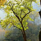 Autumn afternoon in Central Park, New York City by Alberto  DeJesus