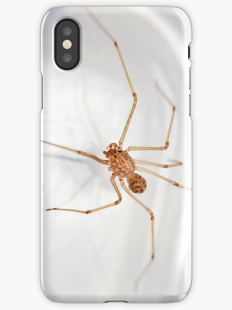 Itsy Bitsy Teeny Weeny Stripey Spitting Spider by Bryan Freeman