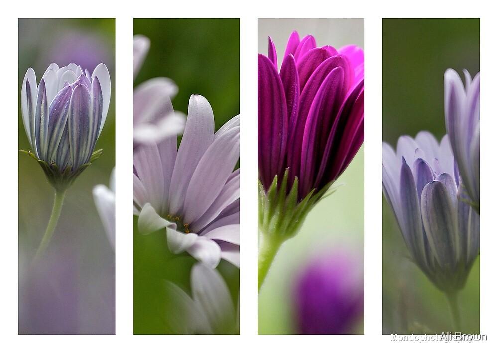 Flowers...  by Ali Brown