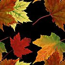 Colorful Fall Leaves by pjwuebker
