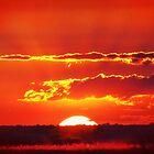 Kalahari Sun by Owed To Nature
