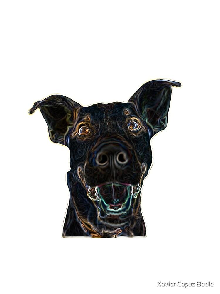 Black Dog de criptoarbitraje