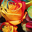 SURREAL ROSES by pjwuebker