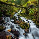 Fairytale Creek by Thomas Dawson