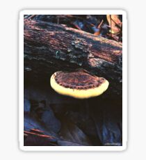 Shelf Mushroom Sticker