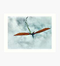 It's a Bird, It's a Plane, It's a Kite! Art Print