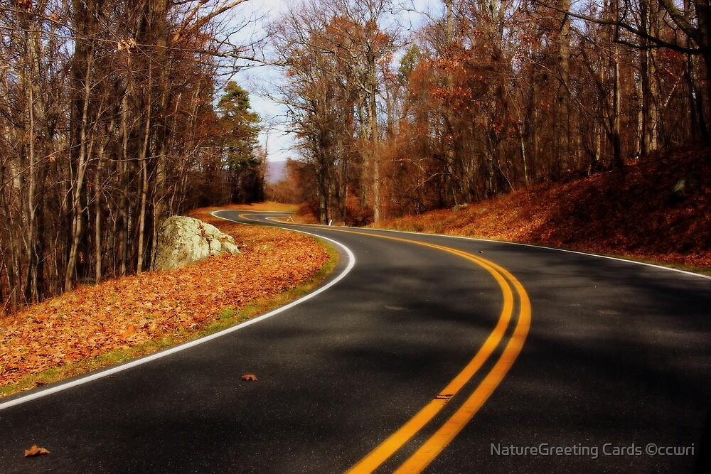 Last of  the Fall Colors, Sky Line Drive Virginia by NatureGreeting Cards ©ccwri