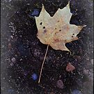 Leaf and water drops by jrier