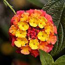 Flower by Bill D. Bell