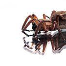 Creepy Crawly by Josie Jackson