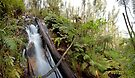 Found: A 30m high unmapped waterfall by Travis Easton