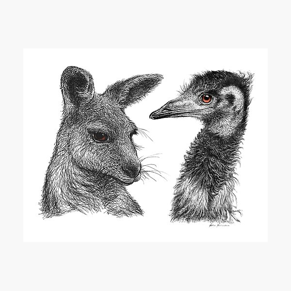 Australian Kangaroo and Emu Drawing Design - Australiana Photographic Print