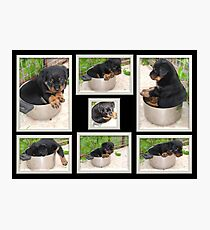 Collage Of Puppy Rottweiler Sitting In Food Bowl Photographic Print