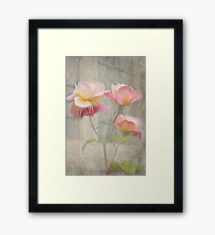 Trinity Roses Framed Print