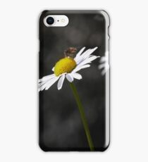 Insect gathering pollen iPhone Case/Skin