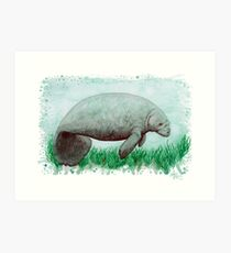 """The Manatee"" by Amber Marine ~ Watercolor painting, art © 2015 Art Print"